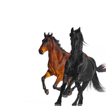 Download Old Town Road (feat. Billy Ray Cyrus) Lil Nas X MP3